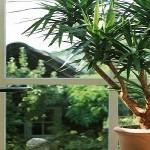 Неприхотливые комнатные растения в дизайне интерьера