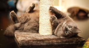 Оригинальная когтеточка для кошки своими руками за 2 часа