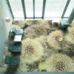 Полы 3d в интерьере квартиры: ощущение реальности изображения